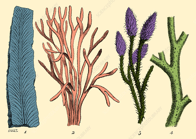Silurian Plants, Illustration