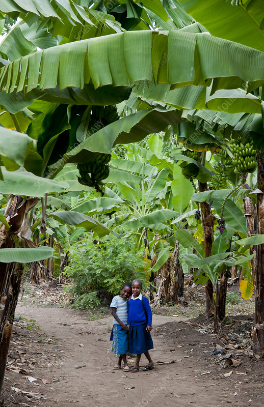 School Children on Banana Farm