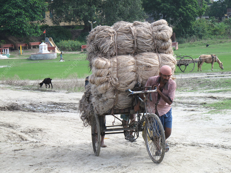 Transporting Heavy Load, India