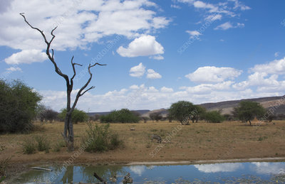 Water Hole, Okonjima Bush Camp, Namibia