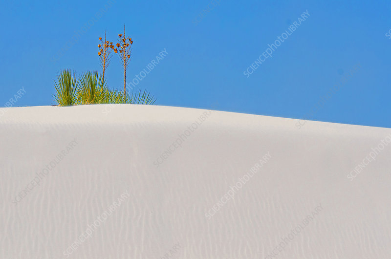 White Sands National Monument, U.S.