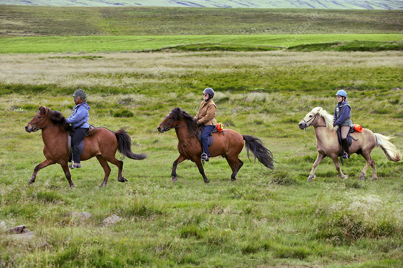 Iceland Horses & Riders