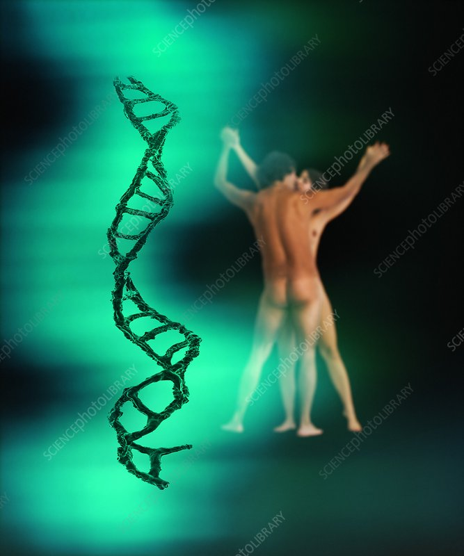 DNA, sex and love, concept