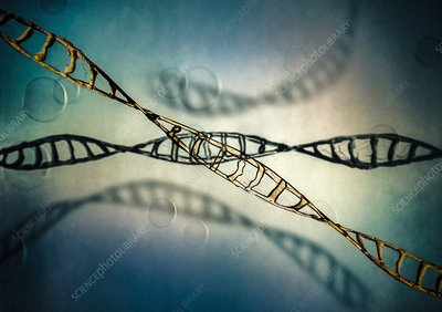 DNA molecules, illustration