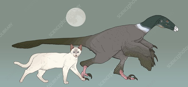 Balaur bondoc dinosaur, illustration