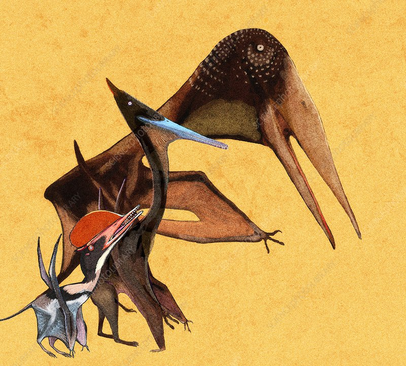 Pterosaur size comparison, illustration