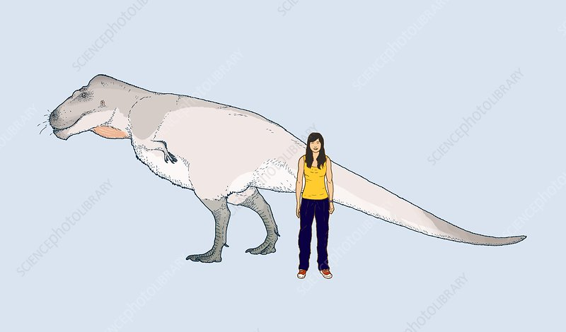 Nanuqsaurus size comparison, illustration