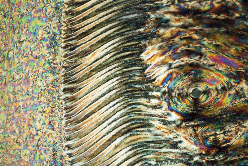 Horse hoof, polarised light microscopy