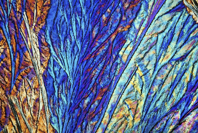 Palmitic acid crystals, light micrograph