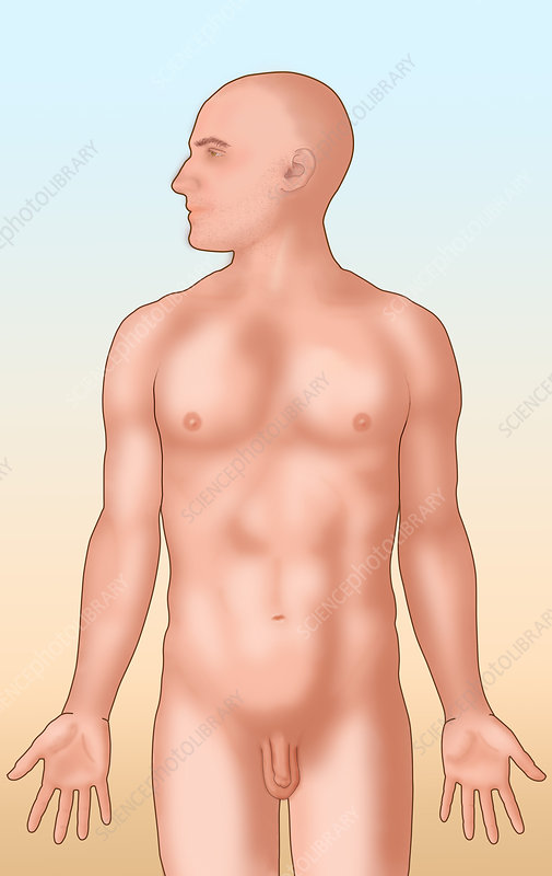 Anatomical Man, Illustration