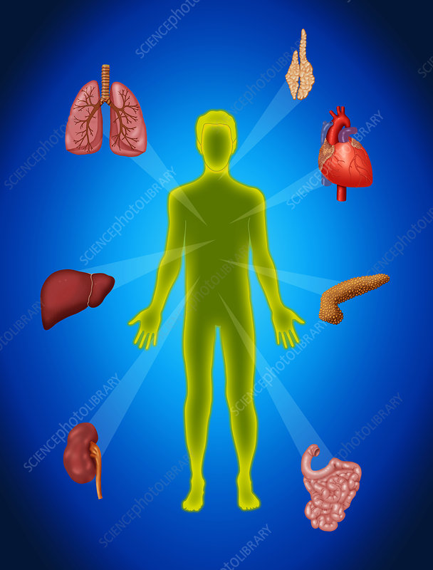 Organ Transplant, Illustration