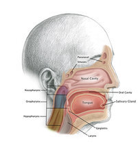 Head and Neck Cancer, Illustration