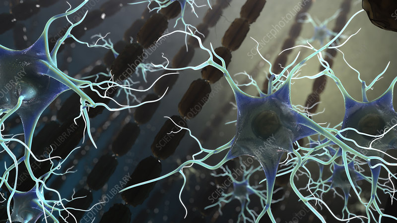 Myelin and Glial Cells, MS, Illustration