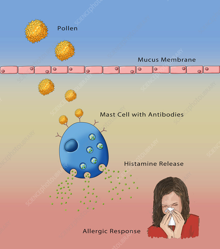 Allergic Response, Illustration