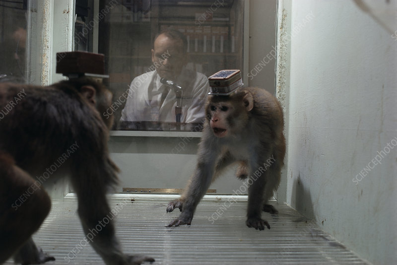 Remote-Controlled Rage, Research Monkeys