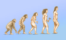 Human Evolution, illustration