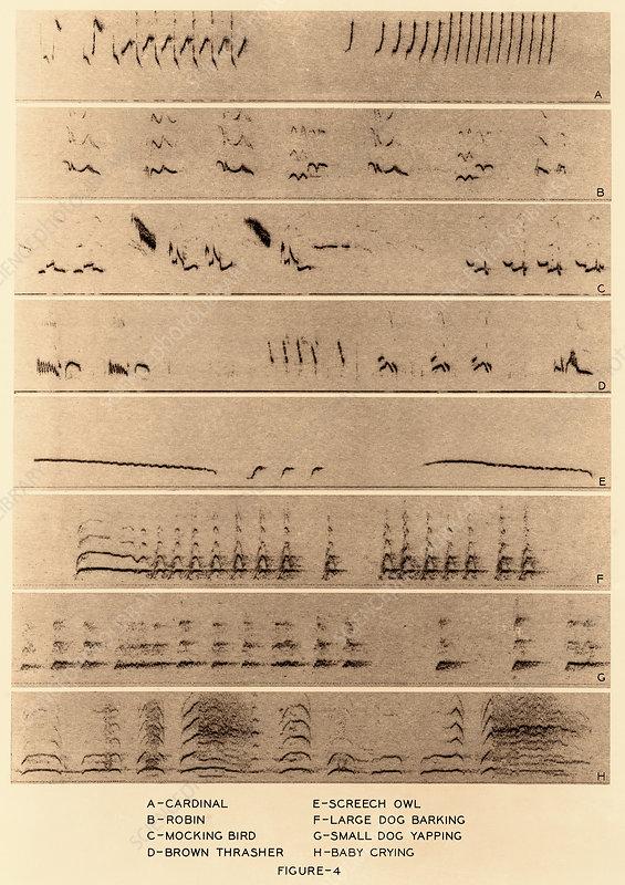 Audio Spectrograms - Stock Image - C027/8364 - Science Photo Library