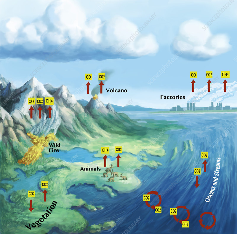 Carbon Cycle, illustration
