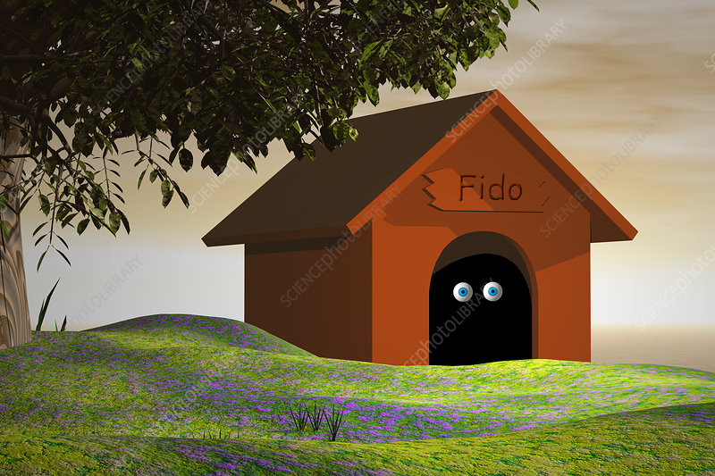 In the Doghouse, illustration