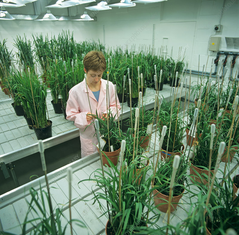 Controlled Environment for Wheat Plants