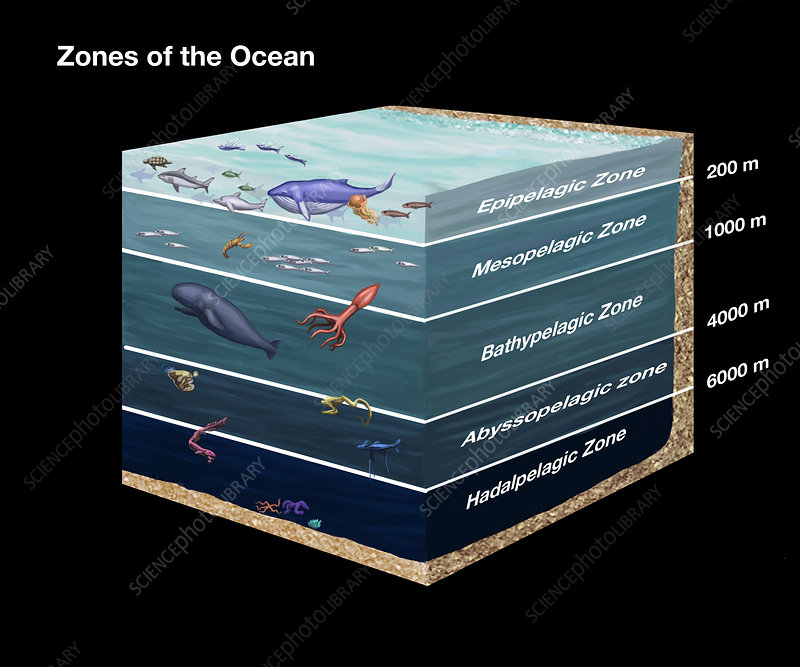 Zones of the Ocean, illustration