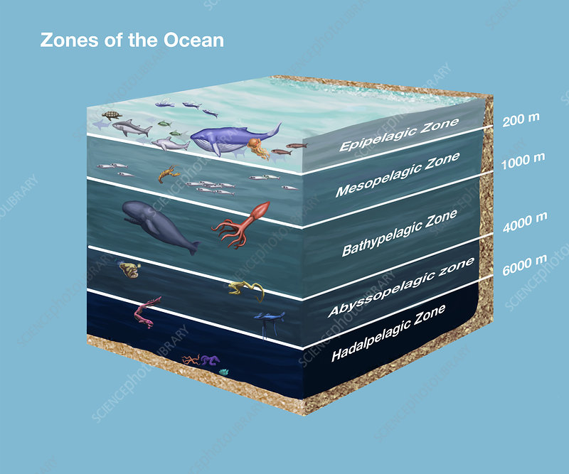 Zones of the Ocean, illustration