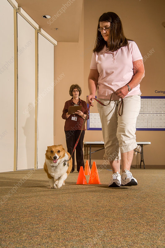 Evaluation of Therapy Dog, 2 of 3