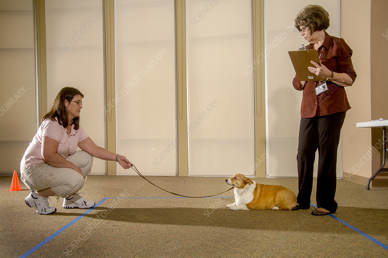 Dog Evaluation for Therapy Animal