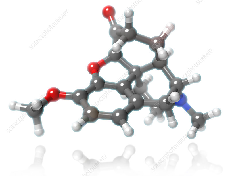 Hydrocodone Molecular Model, illustration