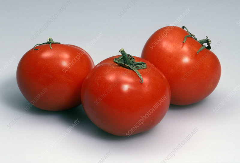 Tomatoes in White Light