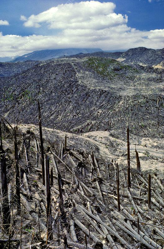 Fallen Trees, Mt. St. Helens