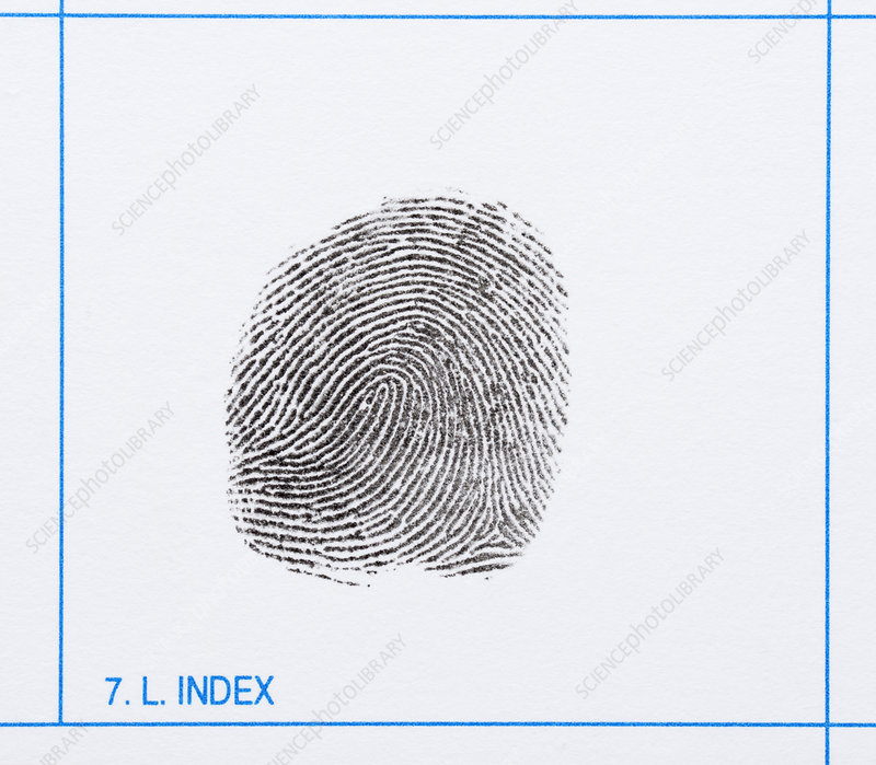 Fingerprint, Index Finger