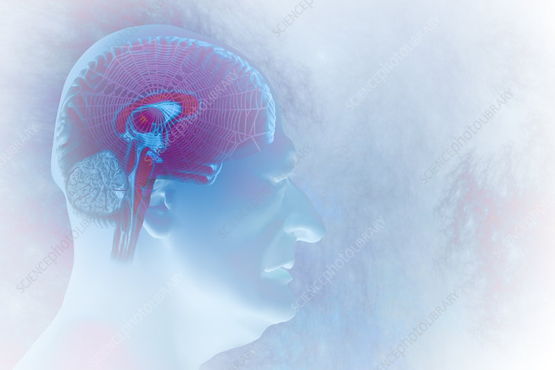 Brain Damage Cobwebs, illustration