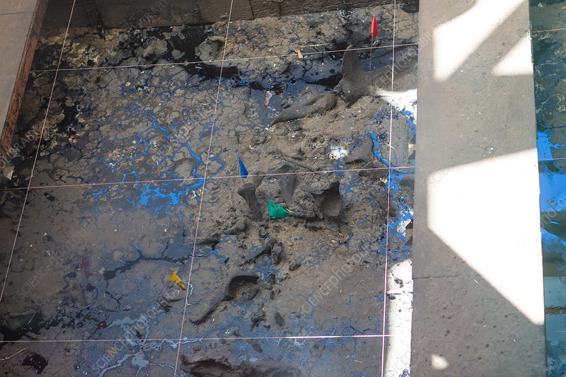 Excavation at La Brea Tar Pits