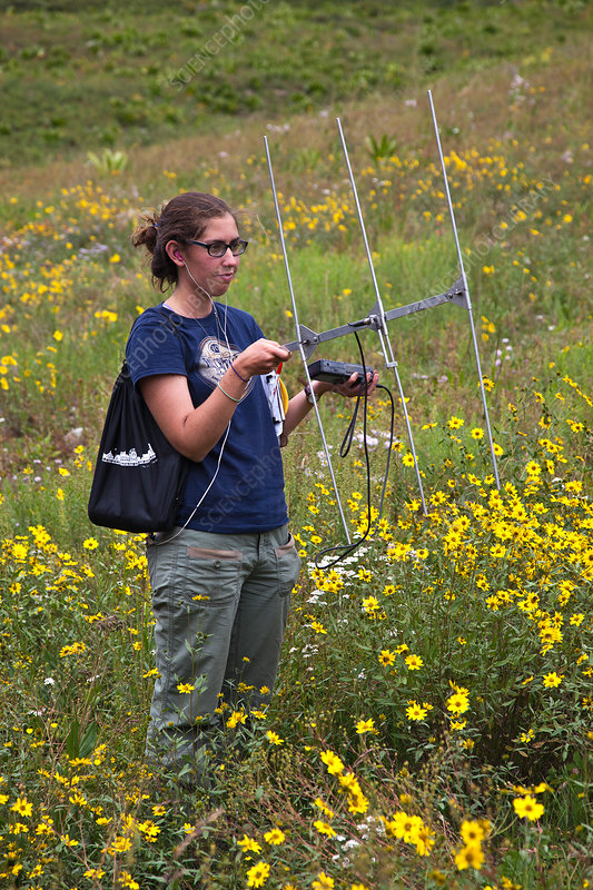 Researcher Tracking Ground Squirrels