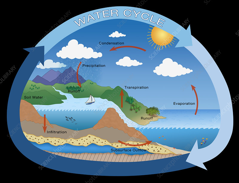 Earth's Water Cycle, illustration