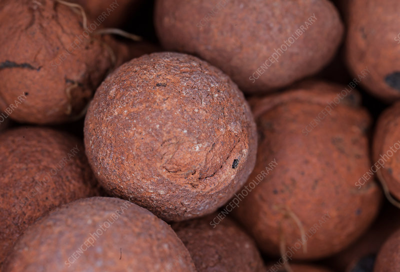 Clay Pebbles for Hydroponic Gardening