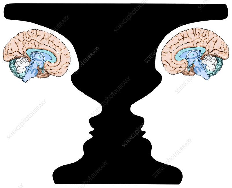 Rubin Vase and Brain, illustration
