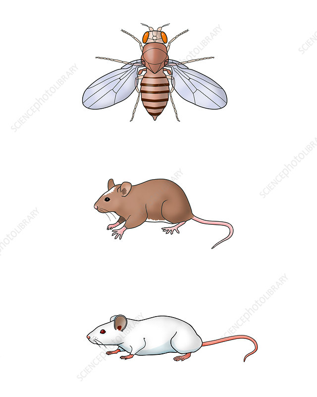 Genetic Icons, illustration
