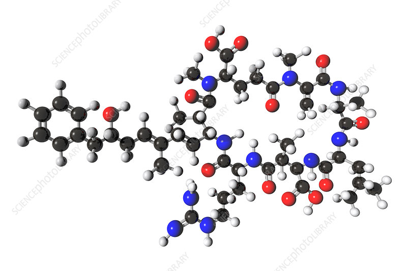 Microcystin Molecular Model, illustration