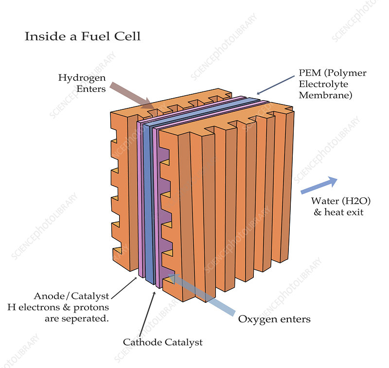 Inside of a Fuel Cell, illustration