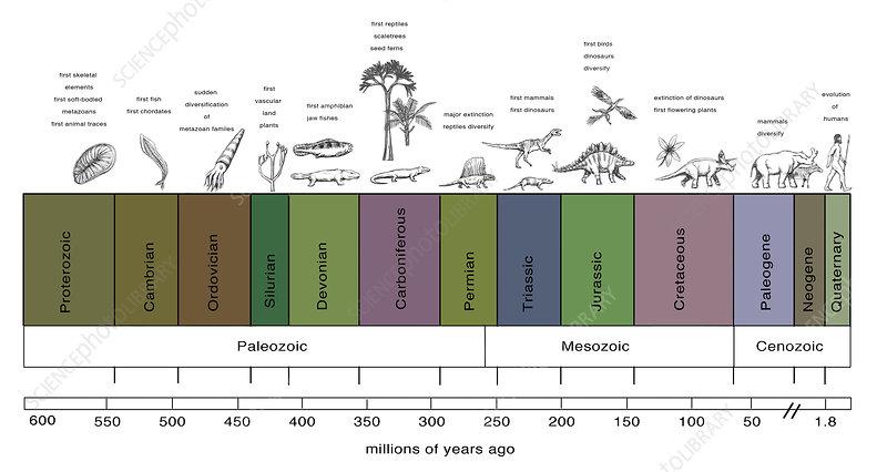 Geologic Time Line, illustration
