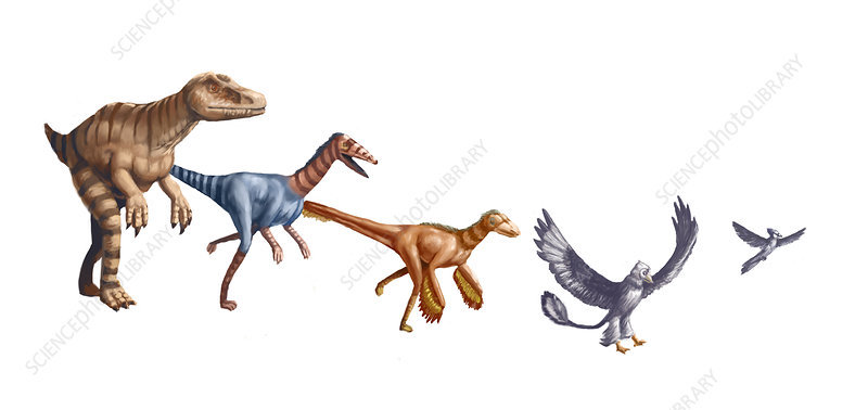 Evolution of Raptors, illustration