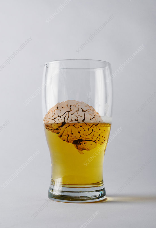Brain and Alcohol, Conceptual
