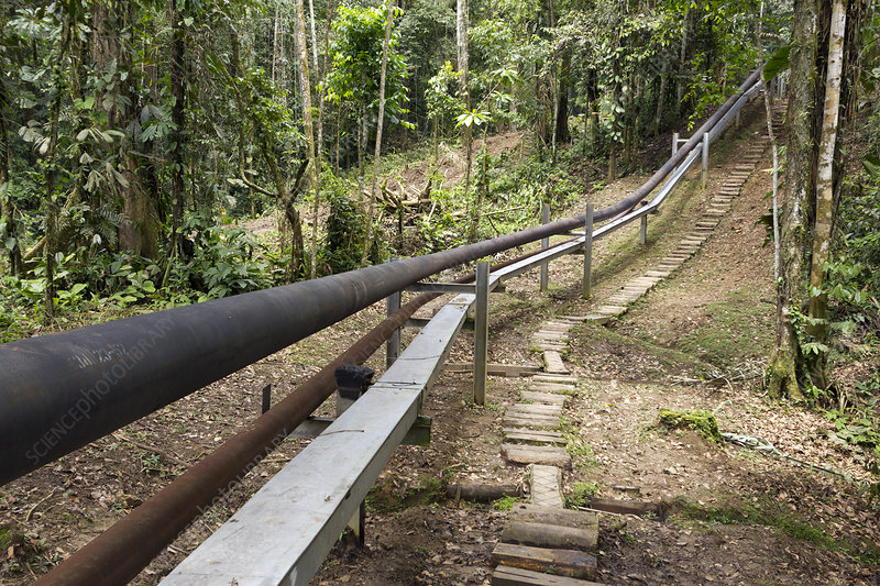 Oil pipeline in rainforest