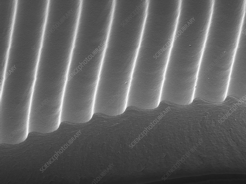 Diffraction Grating (SEM)