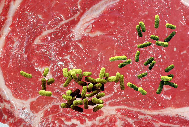 Beef Contaminated with E. coli