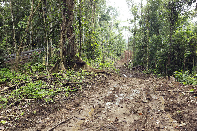Road construction in the Amazon