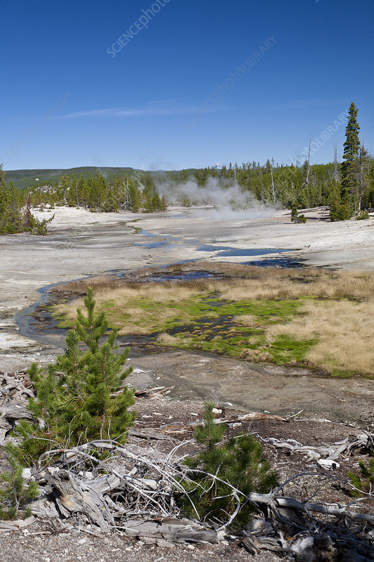 Geothermal Area, Yellowstone