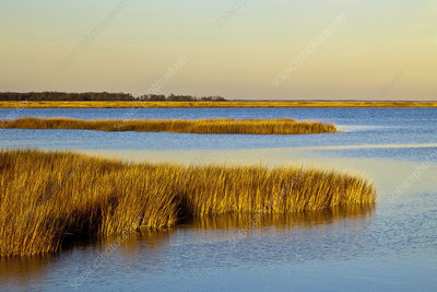 Salt Marsh in Delaware